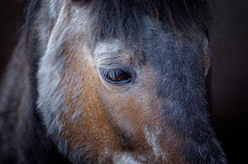 Old horses have special nutritional needs