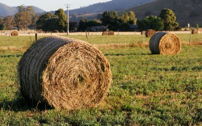 The best thing to feed your horse in the winter time to keep him or her warm is hay!