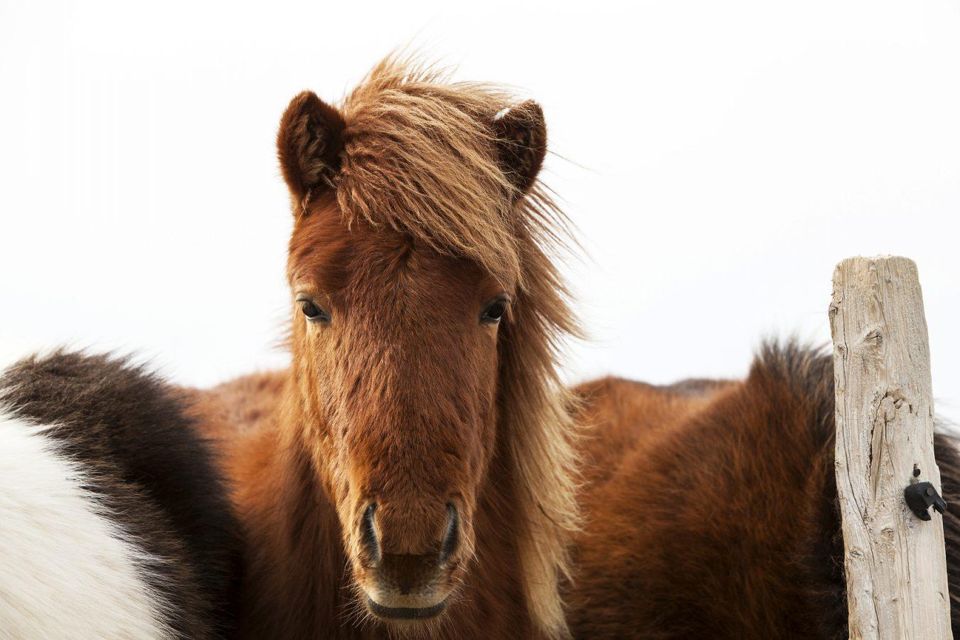 Pony Pellets