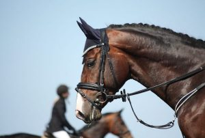 Robank Equine Recreation & Show