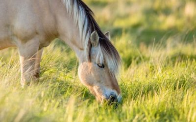 Do horses need additional nutrients when on pasture and have a mineral block?